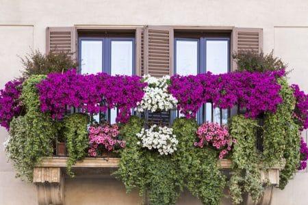 Des surfinias pour une décoration balcon réussie
