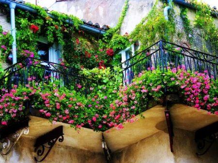 Décoration balcon, plantes grimpantes