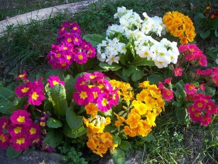 D coration jardin 6 id es for Vasques pour fleurs jardin